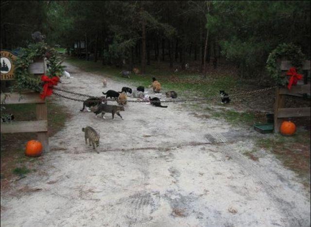 Город кошек - Caboodle Ranch