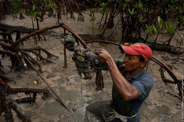 Ловля крабов в Бразилии