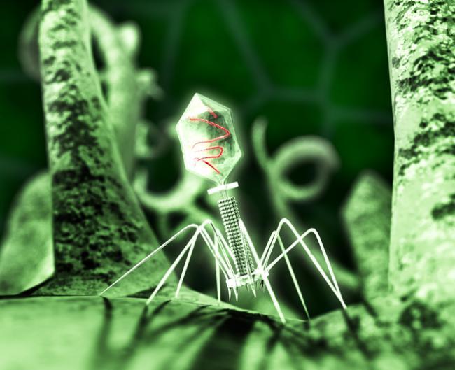 вирусы под микроскопом фото