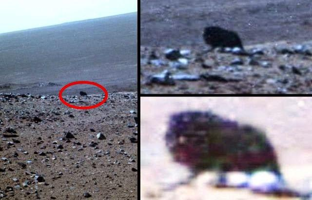 """Марсоход """"Оппортюнити"""" обнаружил кабана на Марсе."""