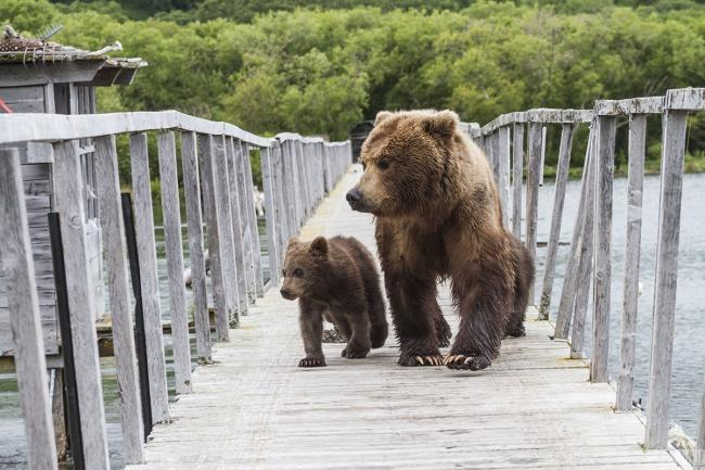Картина маслом: Три медведя.