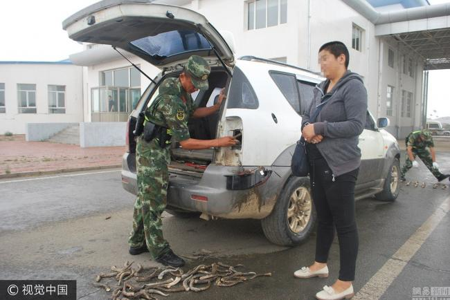 На монгольской границе поймали контрабандиста Сайгаков.