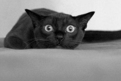 Что произойдет, если черный кот дорогу перейдет?